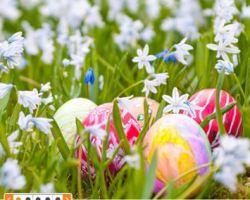 Sportscheck: tolle Ostern Aktionen!